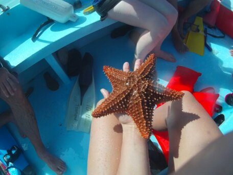 Holding a giant starfish