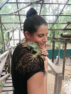 Green Iguana Conservation Project Sanctuary