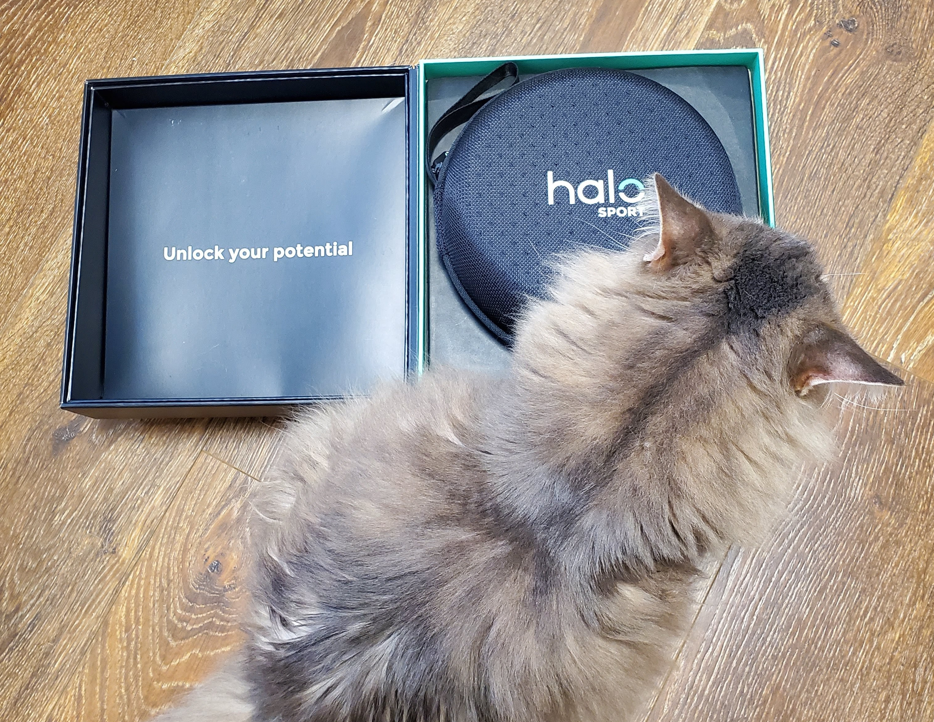 My cat sitting next to the box with the Halo sport headphones in it